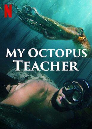 Netflix's My Octopus Teacher: an immersive underwater experience